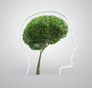 tree-brain-fotolia_394279882 (1)